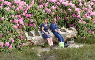 Rhododendorons wandelbankje
