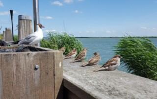 blog Nijmegen
