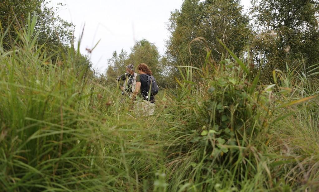 Offroad wandelen in natuurgebied Sippen-Finnen, De Friese Wouden