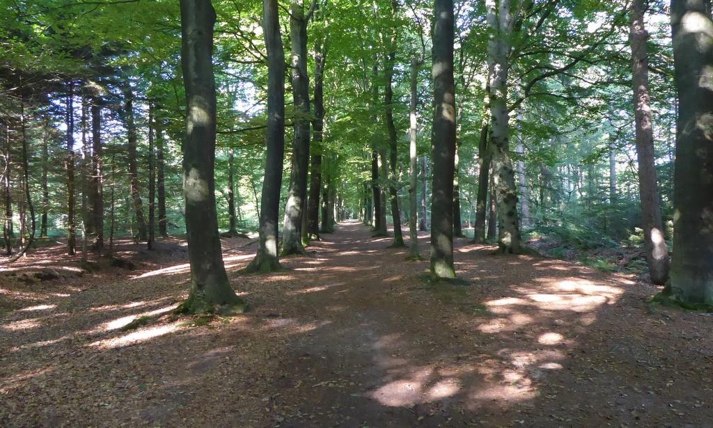 wandelen in Beetsterzwaag
