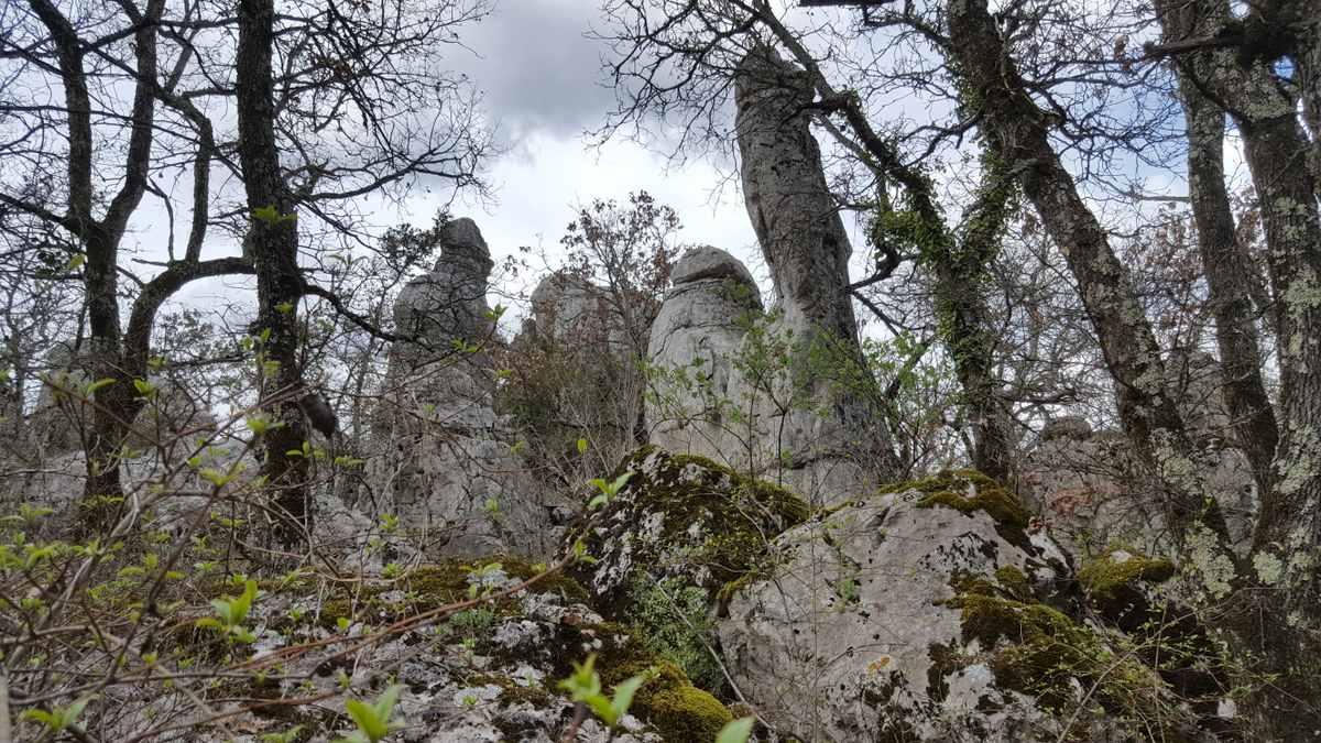 Bois de Païolive, grillige rotsen
