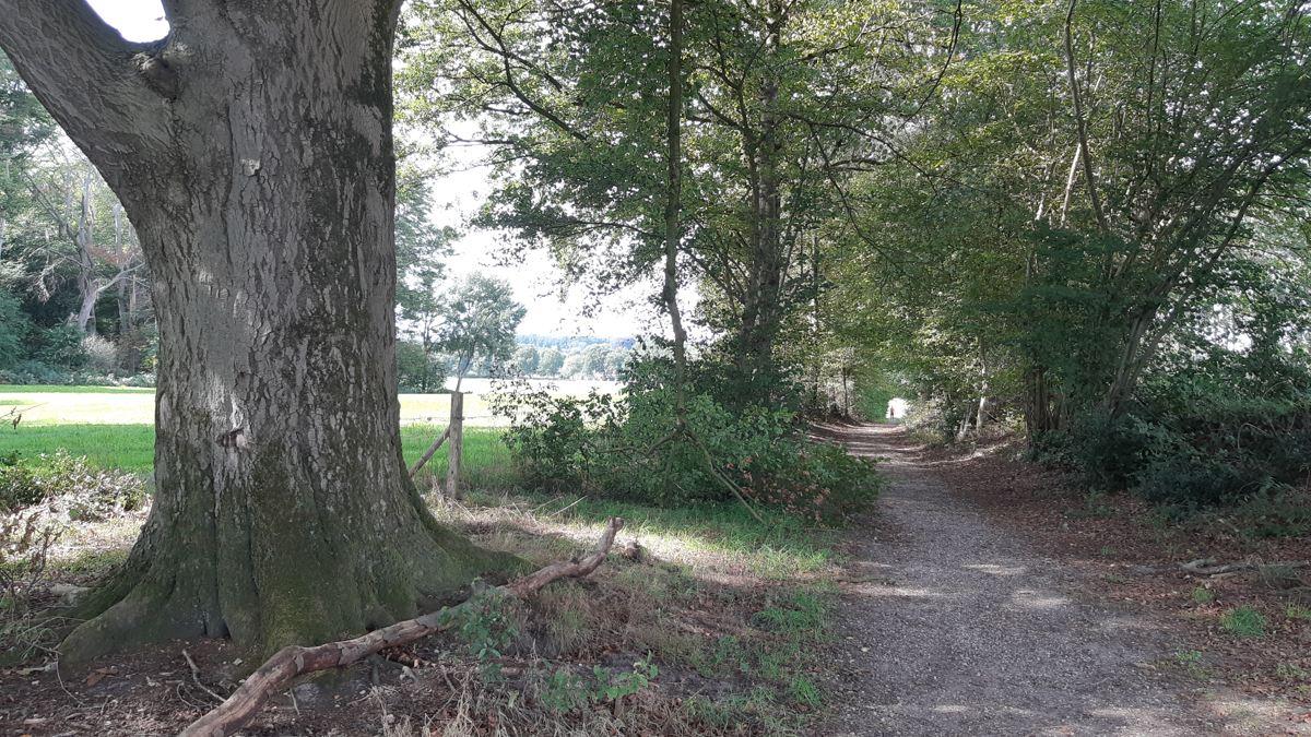 De mooiste wandeling van Nederland 2018 - Twentse Wallen - Markelo