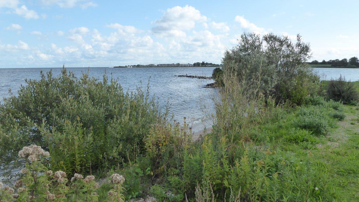Koopmanspolder - Ijsselmeer - Medemblik