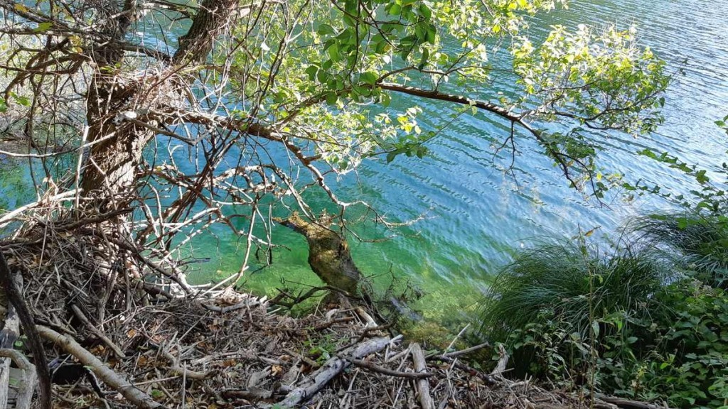 Dichtbij zie je hoe helder het water is - rivier Krupa - Kroatië