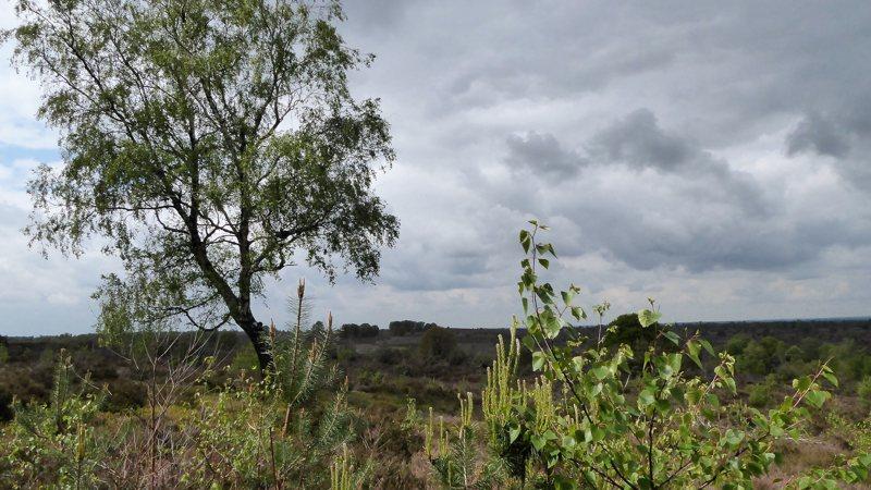 NS Wandeling De Holterberg; van Nijverdal naar Holten