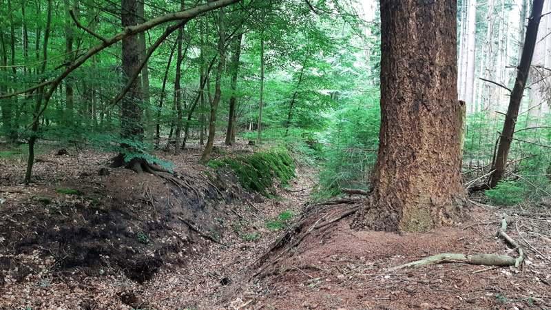 Geul in het bos