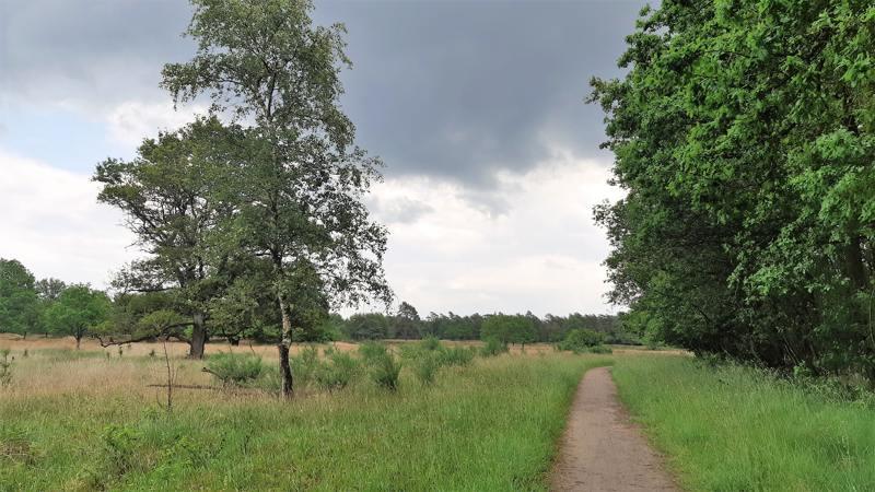 Rand heide en Prinsenbos in het Drents-Friese Wold
