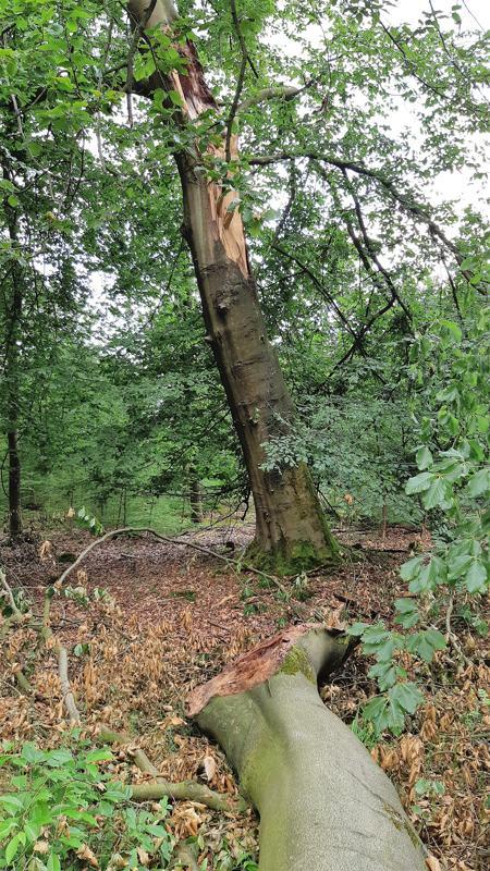 Afgebroken tak aan boom