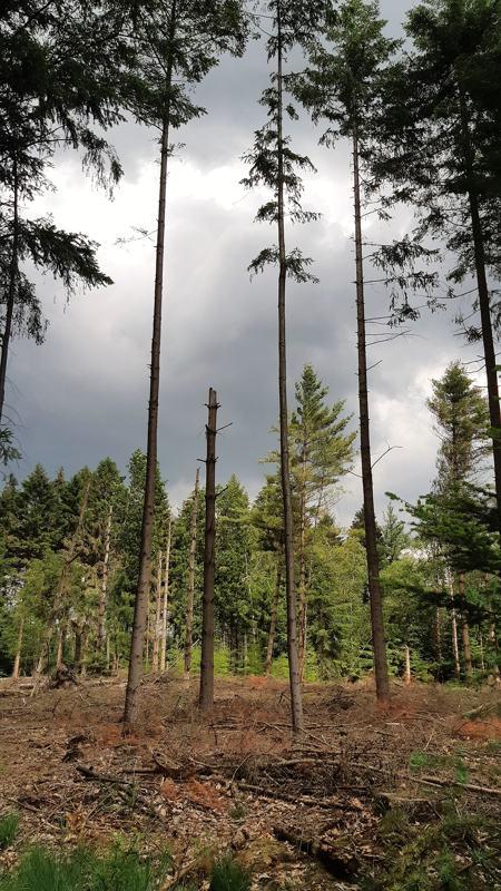 Dreigende worden in het bos
