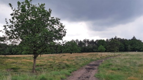 Boswachterspad Olde Smildeger in het Drents-Friese Wold