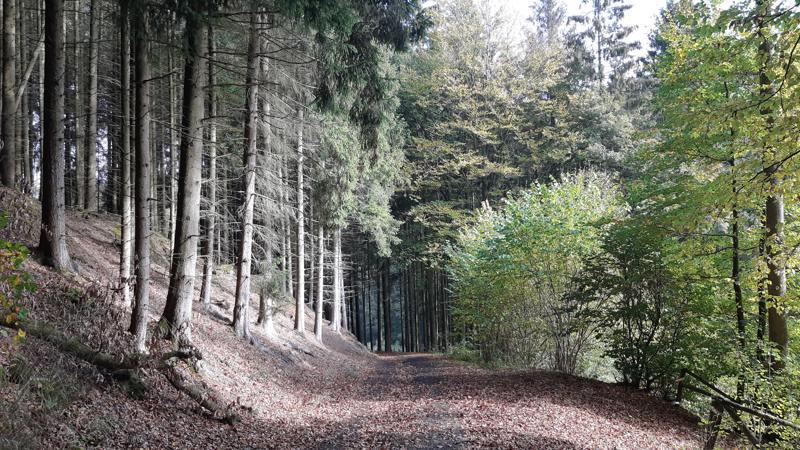 wandelen in Duitsland door het bos