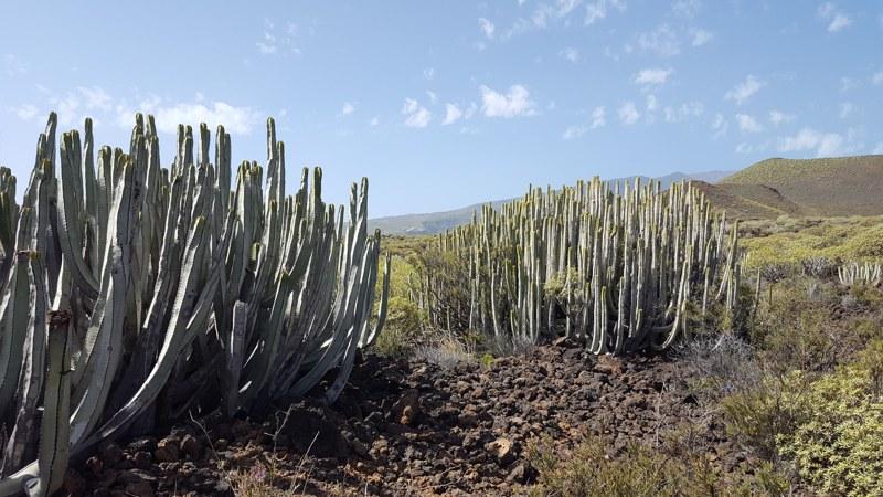 Wandelen op de Canarische Eilanden Tenerife